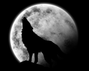 Lupo che ulula alla luna - Lande Incantate