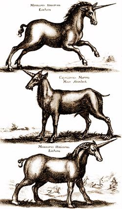 serie disegni unicorno - Lande Incantate