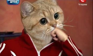 gatto hum - Lande Incantate