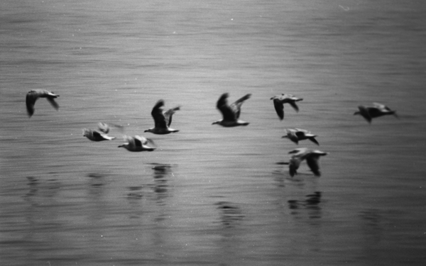 jonathan-livingston-seagull-review-richard-bach-russell-munson-photographs